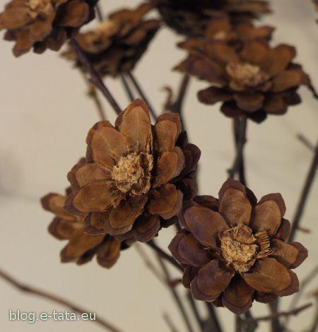 Kwiatki z szyszek, zbliżenie