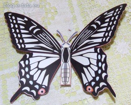 Motyl z papieru, zrobiony przez Zuzię